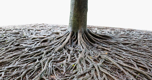 Resilience and Adaptability: HR at the Root of Better Business